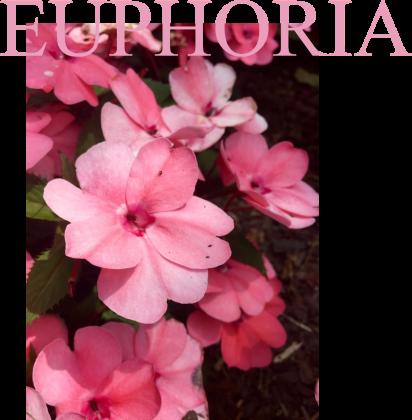 EUUUUPHORIA