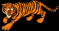 bluza rozpinana z kapturem dla chłopaka tygrys