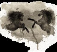 czarny kuebk konie