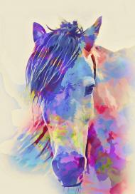 koszulka z głową konia kolor