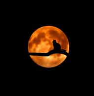 maseczka kolorowa z wzorem księżyc kot