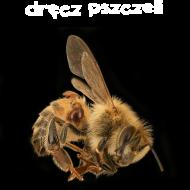 Dręcz pszczeli