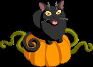 Czarny kot dynia maseczka