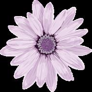 Koszulka dziewczęca kwiatek