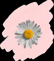 Koszulka z kwiatkiem