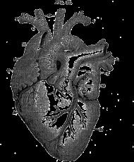 Serce anatomiczne